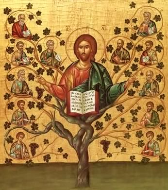 MEDITAÇÕE DOMINICAIS – Crescer devagar, porém sempre – V Domingo da Páscoa